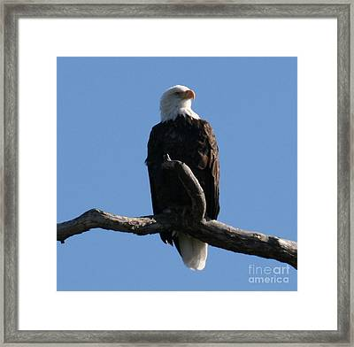 Land Of The Free And Home Of The Brave Framed Print by Robert Torkomian