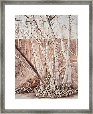 Land Of The Silver Birch Framed Print