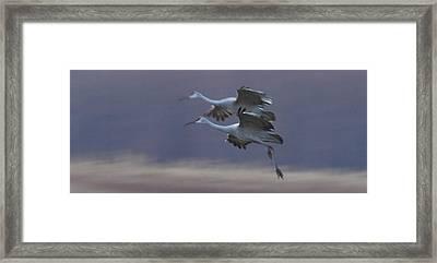 Framed Print featuring the photograph Landing Gear Down by Shari Jardina