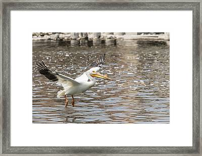 Landing Gear Down Framed Print by Thomas Young