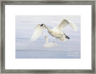 Framed Print featuring the photograph Landing In The Cold by Larry Ricker