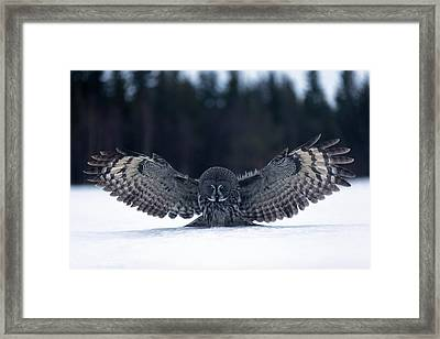 Landing In The Snow Framed Print by Kique Ruiz