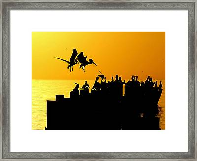 Landing In The Sunset Framed Print