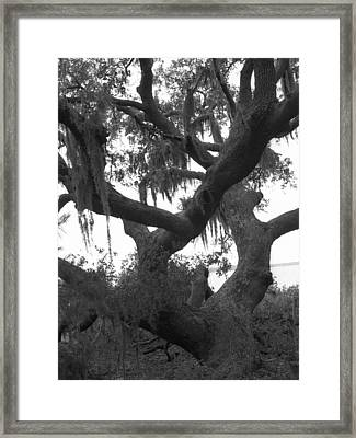 Lands End Talking Tree Framed Print