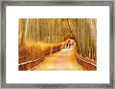 Landscape - Kyoto Arashiyama Bamboo Golden Grove Path Framed Print