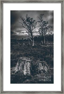Landscape Of A Dark Creepy Australian Woodland  Framed Print