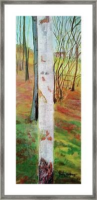 Landscape Silver Birch Framed Print