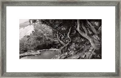 Landscape - The Forbidden Forest Framed Print by Mike Savad