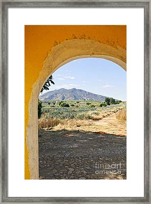 Landscape With Agave Cactus Field In Mexico Framed Print by Elena Elisseeva