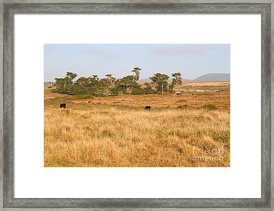 Landscape With Cows Grazing In The Field . 7d9957 Framed Print