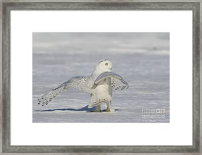 L'ange. Framed Print