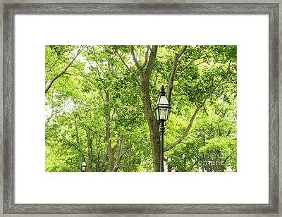 Lanterns Among The Trees Framed Print