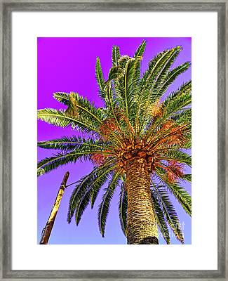 Blue Sky And Palm Tree Framed Print by Wilf Doyle