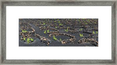 Lanzarote Vineyards Framed Print by Delphimages Photo Creations