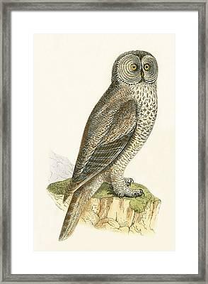 Lap Owl Framed Print