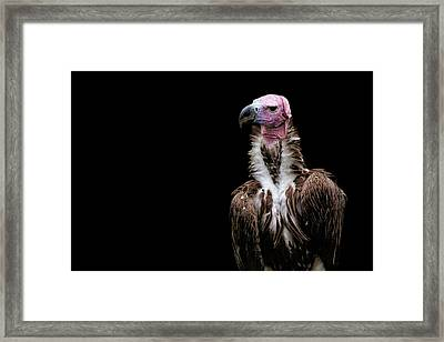 Framed Print featuring the photograph Lappet-faced Vulture - Africa - African Vulture - Nubian Vulture by Jason Politte