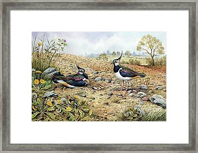 Lapwing Family With Goldfinches Framed Print by Carl Donner