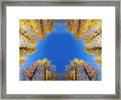 Larches Reflection Framed Print