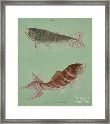 L'ardoise, Le Rabicon Framed Print