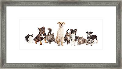 Large Group Of Cats And Dogs Together Framed Print by Susan Schmitz