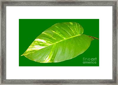 Framed Print featuring the digital art Large Leaf Art by Francesca Mackenney
