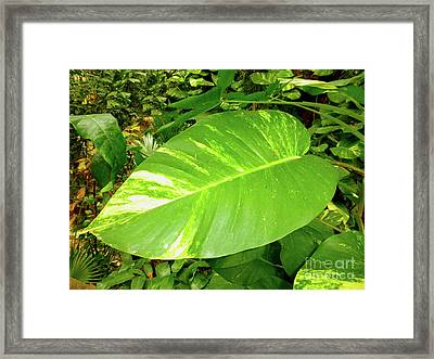 Framed Print featuring the photograph Large Leaf by Francesca Mackenney