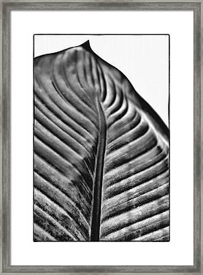 Large Leaf Framed Print