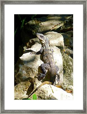 Framed Print featuring the photograph Large Lizard M by Francesca Mackenney