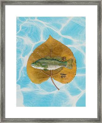Large Mouth Bass #2 Framed Print