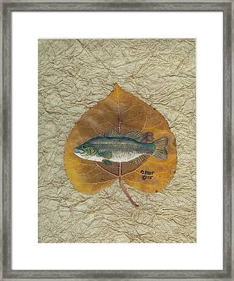 Large Mouth Bass #3 Framed Print