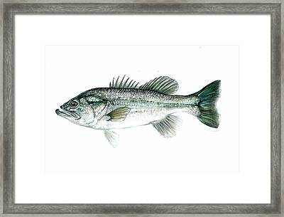 Large Mouth Bass Framed Print by Jim  Romeo