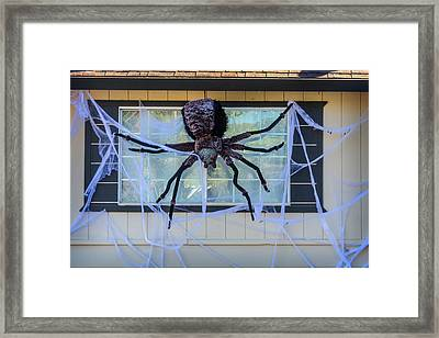 Large Scary Spider  Framed Print by Garry Gay