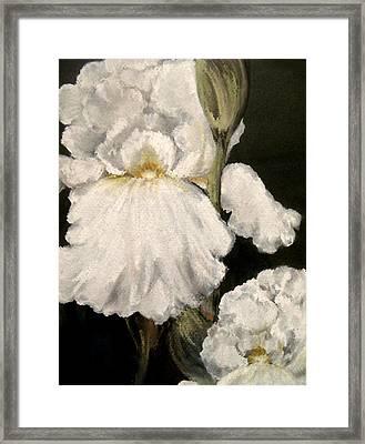 Large White Iris Framed Print by Carol Sweetwood