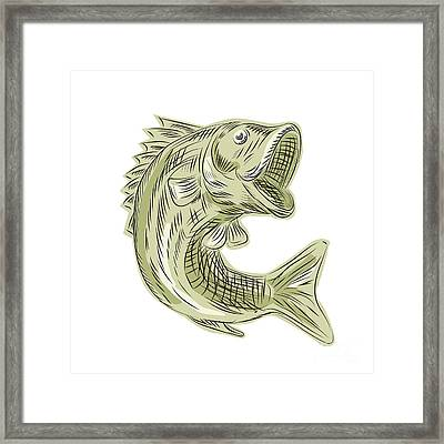Largemouth Bass Fish Etching Framed Print by Aloysius Patrimonio