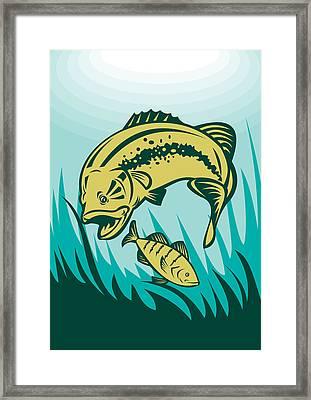 Largemouth Bass Preying On Perch Fish Framed Print by Aloysius Patrimonio