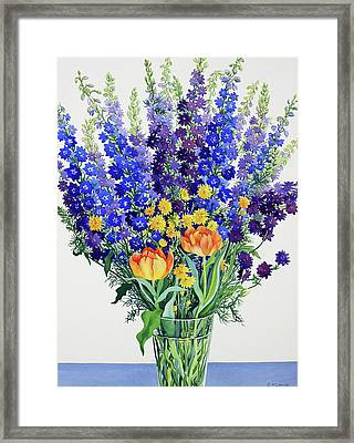 Larkspur And Delphiniums Framed Print by Christopher Ryland