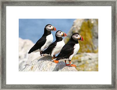 Larry Moe And Curly Framed Print by Stanley Klein