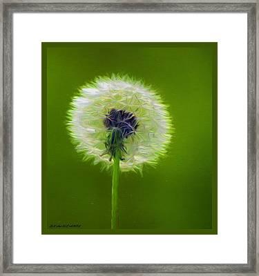 Larry's Dandelion Framed Print by Debra Lynch