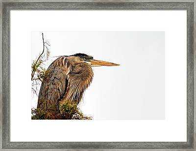 Laser Gaze Framed Print