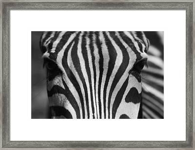 Lashez Framed Print