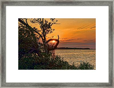 Lasso The Sun Framed Print by HH Photography of Florida