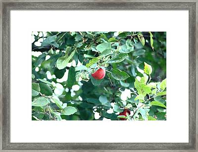 Framed Print featuring the photograph Last Apple by R B Harper