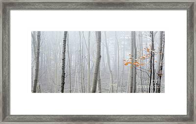 Last Autumn Branch Framed Print by Svetlana Sewell
