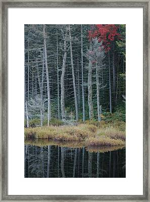 Last Color Framed Print by William A Lopez