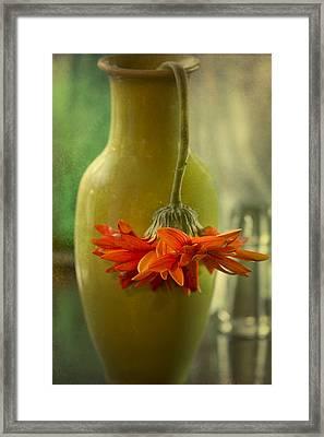 Last Daisy Framed Print