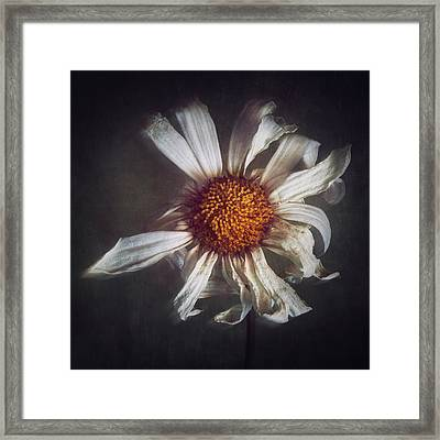 Framed Print featuring the photograph Last Dance by Amy Weiss