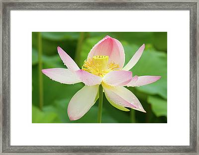 Last Day Of Blooming Framed Print by Elvira Butler