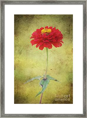 Last Days Of Summer Framed Print by Angela Doelling AD DESIGN Photo and PhotoArt