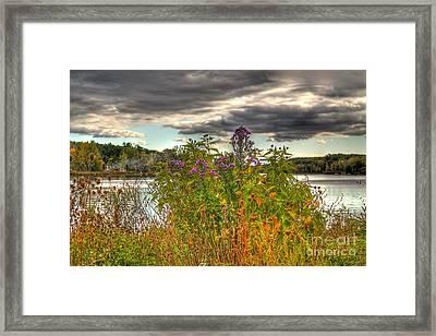 Last Flower Of Fall Framed Print by Robert Pearson