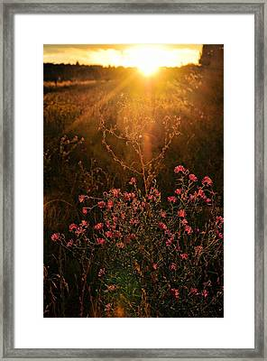 Framed Print featuring the photograph Last Glimpse Of Light by Jan Amiss Photography